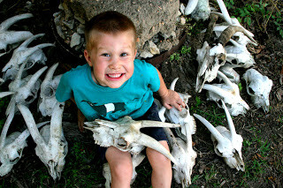Goat Skulls